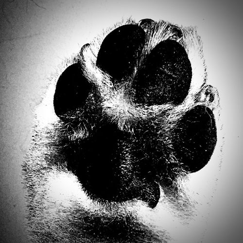 High five from the sweetest. Close-up Indoors  Pets Love Paw Print No People Pure Heart