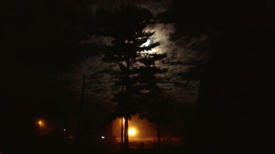 Night Tree No