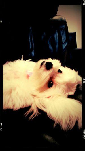 Puppy Sofa Relaxing