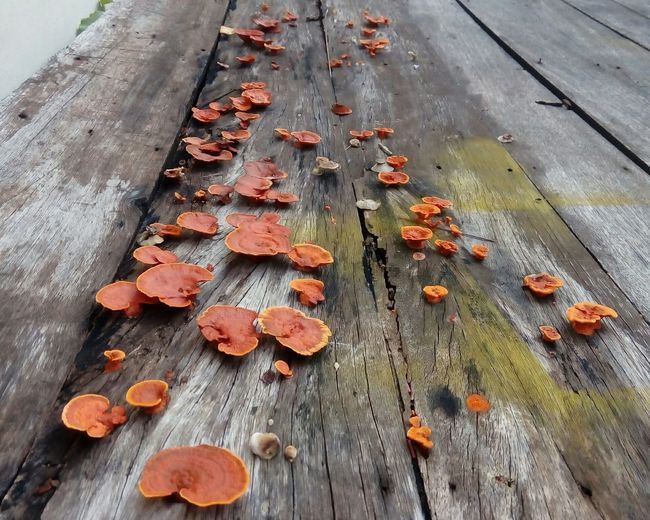 High angle view of mushrooms growing on wood