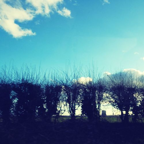 Bushes Chopped Trees Bushes Nature Tree Outdoors Sky No People Nature Day Beauty In Nature