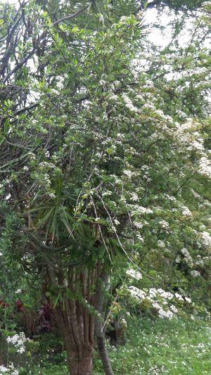 看似枯枝,卻也能開出美麗的花朵 花 人不可貌相 樹枝