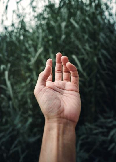 Close-up of hand  against blurred dark green grass  background