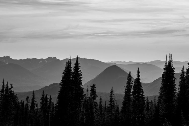 Exploring the Pacific North West with my best friend. Beauty In Nature Blackandwhite Bnw Day Gradient Growth Landscape Levels Majestic Mountain Mountain Range No People Non Urban Scene Non-urban Scene Oregon Outdoors Physical Geography PNW PNWonderland Portland Remote Seattle Travel Destinations Washington State Weather