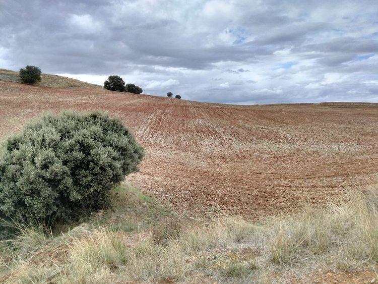 Campo Forest Cultivo Tierra Arbusto Nublado