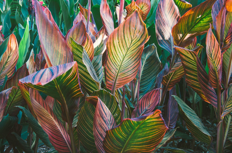 Growth Leaf Plant Part Plant Multi Colored Full Frame Backgrounds Green Color No People Day Close-up Nature Beauty In Nature Outdoors Pattern Tranquility Focus On Foreground High Angle View Freshness Abundance Leaves