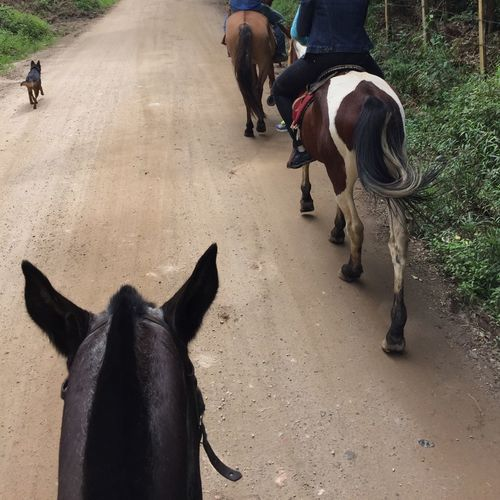 Domestic Animals Mammal Livestock Horse Working Animal Outdoors Togetherness Day Men Pets Low Section Dog Farm Cavalo Farm Animals Farm Animal Fazenda Cavalos