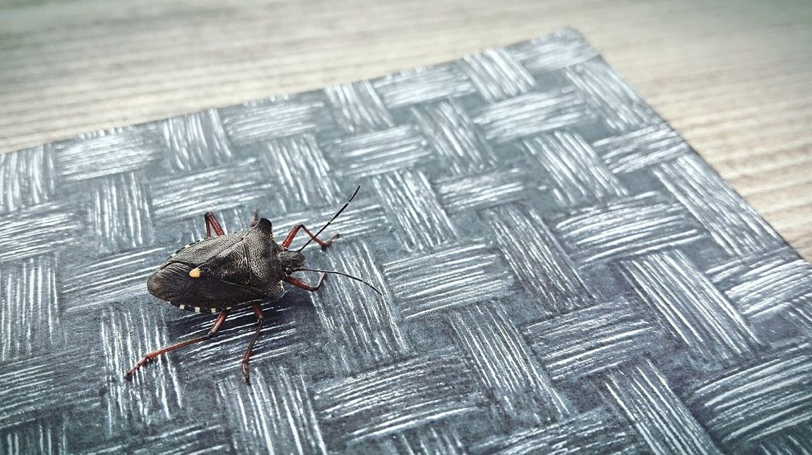 Caught This Guy While Drawing FreeTime Sunnyday☀️ Beetle Insect Nature Hi! Eyeemphotography Eyeem Collection Huaweiphotography Maximum Closeness Focus Object waiting game waiting game The Photojournalist - 2017 EyeEm Awards BYOPaper!