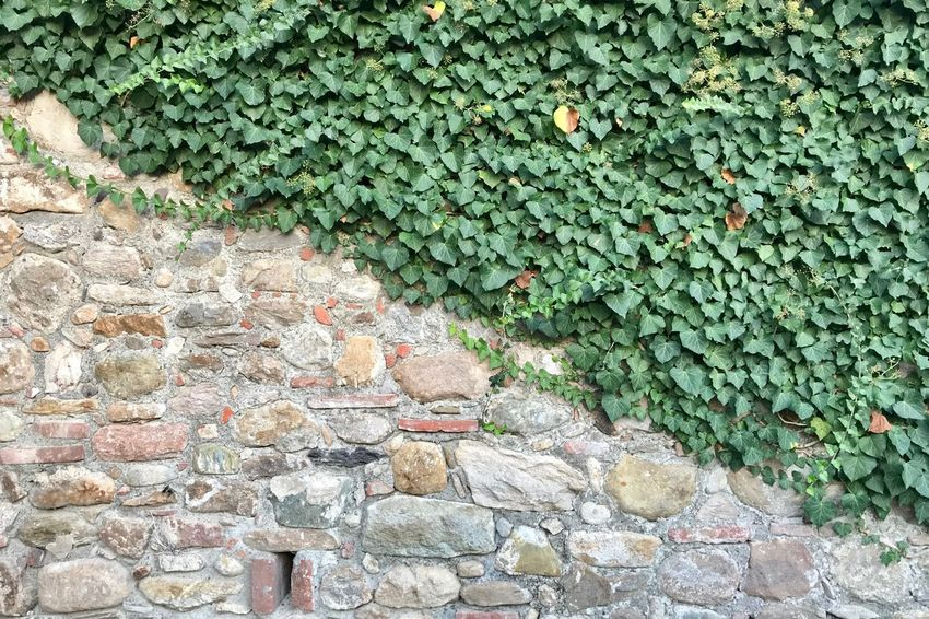 Nature Ivy Stone Wall Stone Material Stone Grass Green Color Green Wall