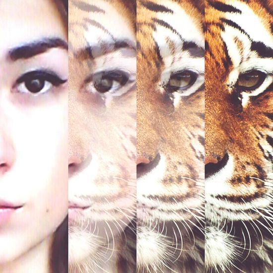 Hello World Animal Face Tiger. Goodnight✌