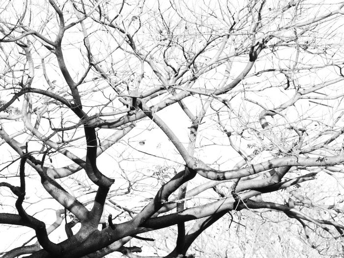 Abstract Black And White Blackandwhite Selective Focus Light And Shadow EyeEm Nature Lover Scenics Close-up Branch Tree Plant Low Angle View Bare Tree No People Nature Beauty In Nature Day Sky Tranquility Outdoors Full Frame Backgrounds Scenics - Nature Tree Trunk Trunk White Color