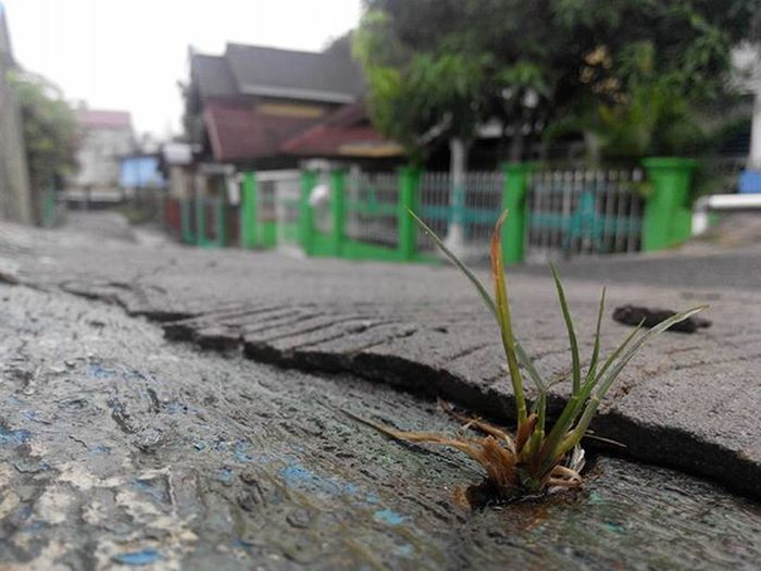 no matter how... you can not kill the nature... Balikpapan Gangsahabat Lenovotography SaveNature Balikpapanku Kaltim INDONESIA Pocketphotography Photostory Lzybstrd