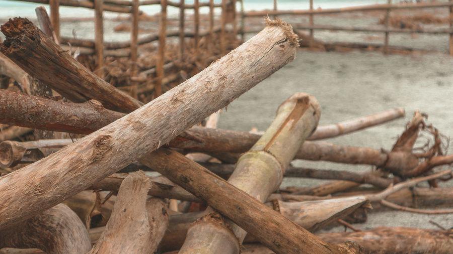 Close-up of bamboos