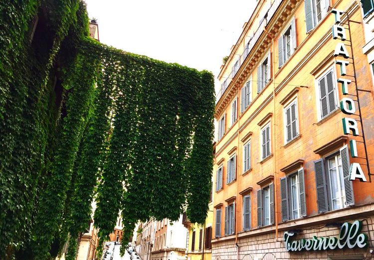 Crawling nature Nature Vs City Discover Your City Old Buildings Green Windows Discovering Rome Streetphotography Hanging Around Hanging Plants Plant Adapted To The City Paint The Town Yellow