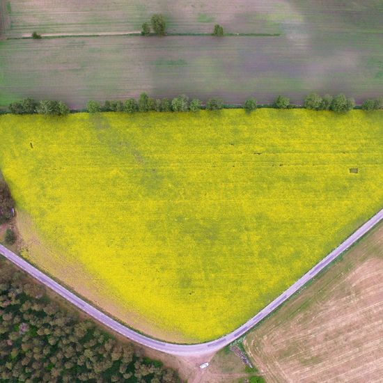 Yellow High Angle View Flower Nature The Sky Is The Limit DJI Phantom 3 Outdoors Beautiful Birdview Aerial View Field Of Flowers