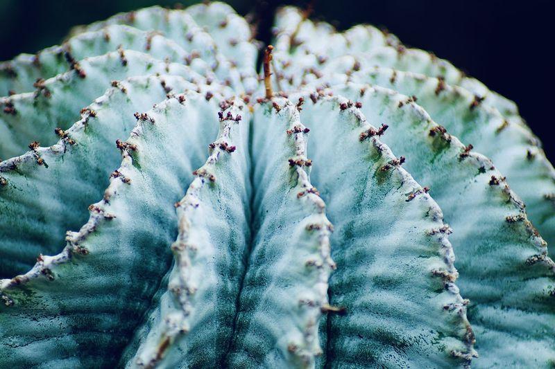 Close-up of succulent plan