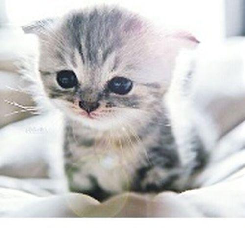 Cat Lovers Sweet♡ Süßi :* Putzig Baby Pet Süüüß Cat Cat♡ Katze Katzen<3