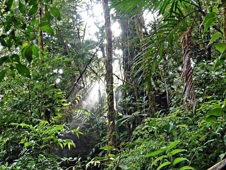 En el Bosque Lluvioso en Monteverde es impresionante hacer fotos a primera hora Travelling Travel Photography Viaje A Costa Rica Fotografia De Viaje