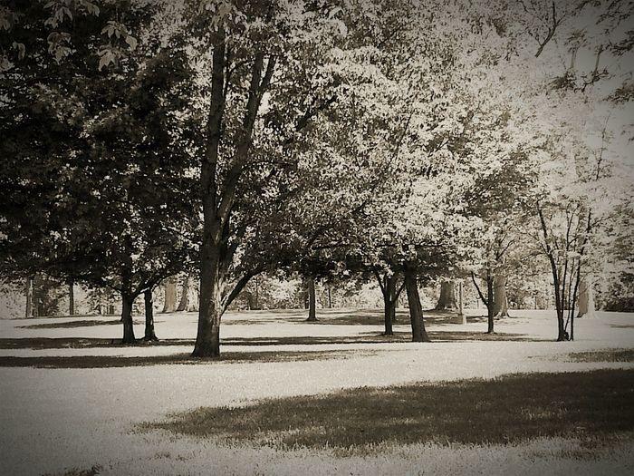 Road Trip Ohio Michigan Via Georgia Rest Stop Black And White Trees