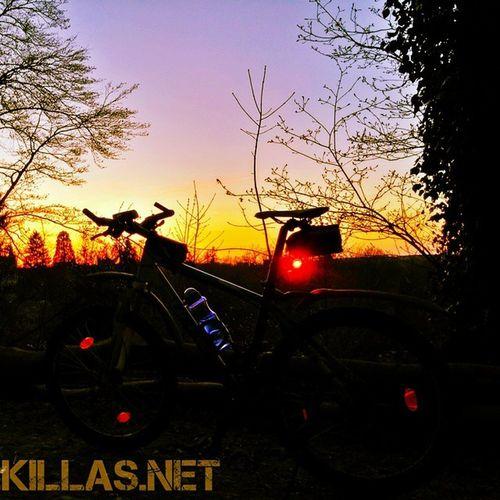 Mountainbike Danzturm Stadtwald  Iserlohn Sonnenuntergang Wald