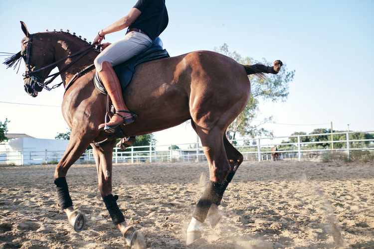 Man riding horse in ranch