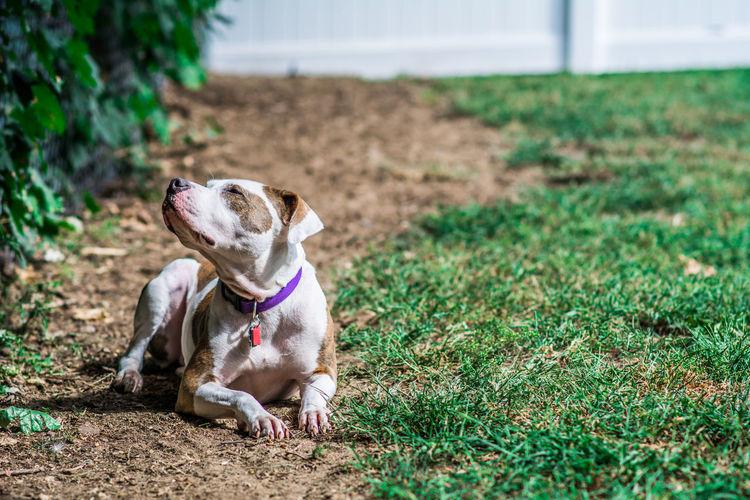 Dog relaxing at garden
