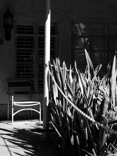Day Surface Level No People Monochrome Photography Emptychair Window Reflections Ferns Palmleaves