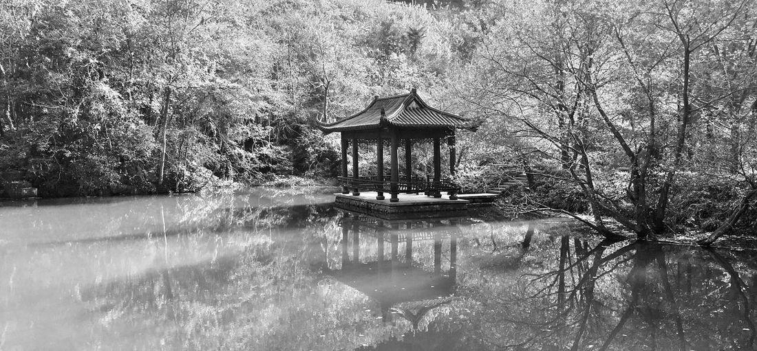 修炼 Water Lake Tree Nature Waterfront Tranquility Day No People Outdoors Beauty In Nature Plant EyeEmNewHere