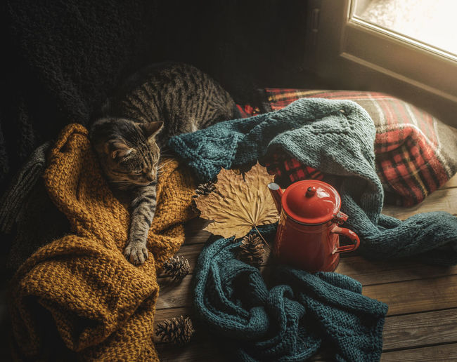 Cat and wool sweaters