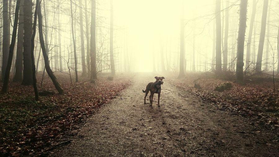 Hund Doglovers Dogmodel Dogs Life Dogphoto Dogslife Fog