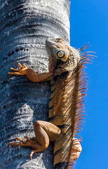 Low angle view of lizard
