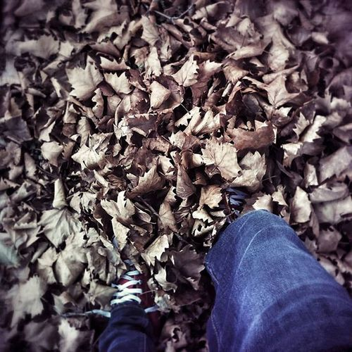 Autuman is around Me Leaves Jeans Walk Fun Play Lazyafternoon Photo Capture Moment Instamoment