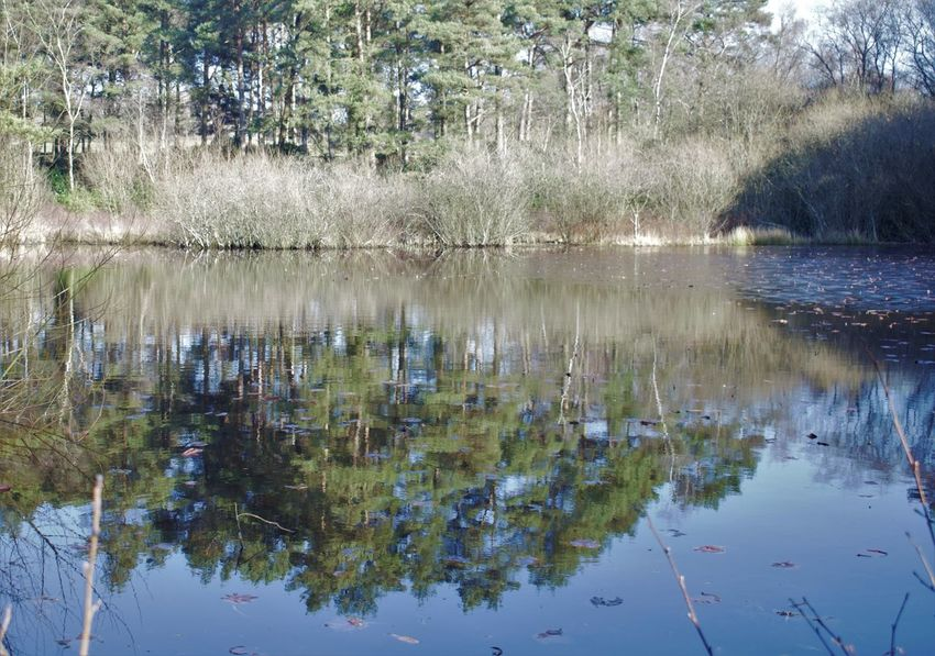 Adventurelands Photography New Forest National Park Beauty In Nature Day Floating On Water Growth Lake Nature No People Outdoors Plant Reflection Reflection Of Trees Scenics Sky Tranquil Scene Tranquility Tree Water