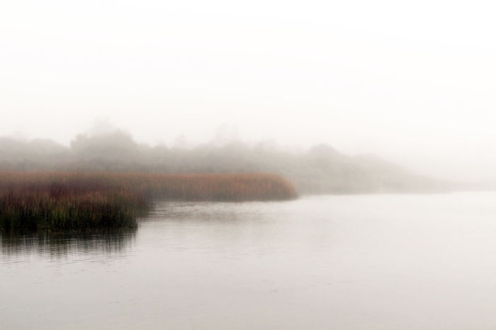 Misty water Autumn Fall Beauty Marsh September Tall Grasses Wisconsin Backgrounds Beauty In Nature Ecology Environment Fall Fog Foggy Lake Landscape Mist Nature Outdoors Scenics Seasons Selective Focus Tranquil Scene Tranquility Water