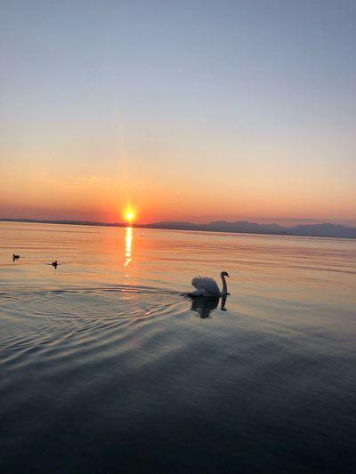 Silhouette birds on beach against sky during sunset