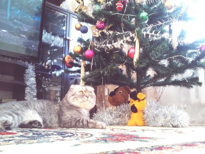 Котик под елочкой First Eyeem Photo