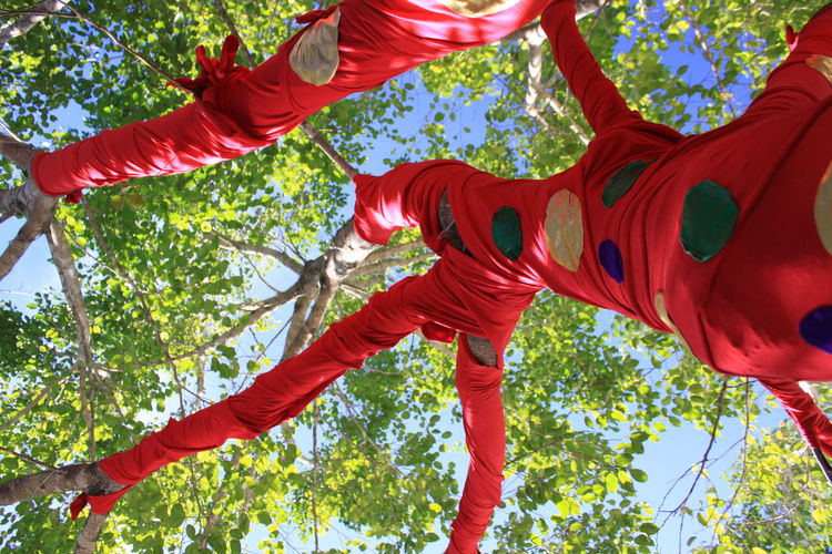Low angle view of red lanterns hanging on tree against sky
