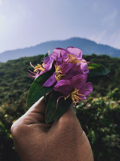 Close-up of hand holding purple flowers against sky
