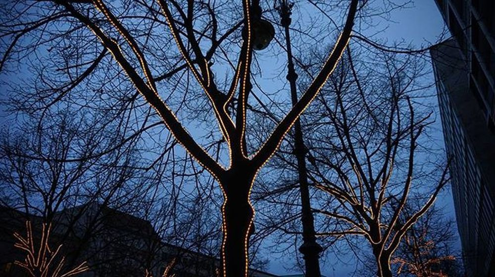 Bäume mit LED Beleuchtung in Berlin Treeswithleds Sonyalpha5000 Happy NiceWeek Berlin