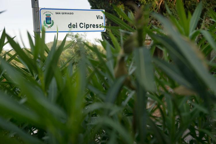 Via Cipressi 2016 Green Color Nature Outdoors Peter_lendvai Phototrip San_gervasio Travel