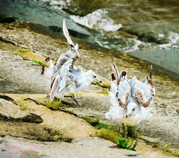 Seagulls, Camden NJ, New Jersey Camden County Sjpelosi Photography Delawareriver Seagulls Riverfront CamdenNJ