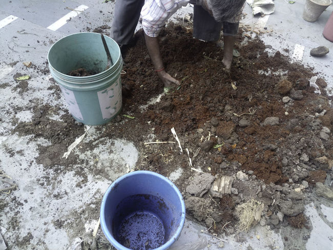 A man mixing a potting mix to fill planters to be a part of an organic kitchen garden. The potting mix contains dried cowdung, soil, bone meal, home made compost and cocopeat. At the bottom of the planters, we will fill leaves and other residue from previously grown plants that will decay over a period of time and make a rich organic waste. The potting mix will be filled in plastic planters, which are round or rectangular. Buckets Filling Planters Gardening Making Potting Mix Making Soil Mixing Potting Mix Potting Mix Bucket Dirty Work Garden High Angle View Human Body Part Human Hand Mixing Ingredients Organic Garden Organic Gardening Plastic Buckets Pot Soil