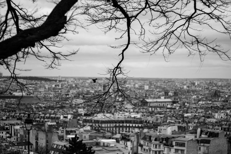 LINE Meditation Paris Sacre Coeur Architecture Bare Tree Bird Blackandwhite Building Exterior Built Structure City Cityscape Crowded Day Horizon Over Land Nature Outdoors Residential Building Residential District Sea Sky Town Tree Water