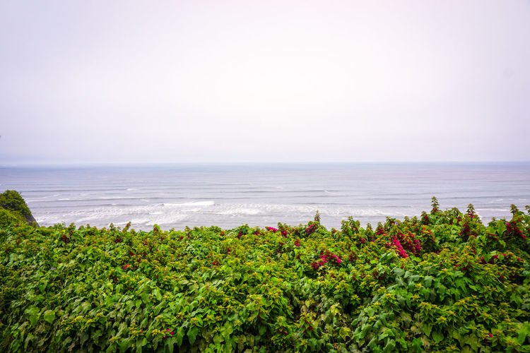 FotosDeSWAO Miraflores Miraflores, Lima Beach Beauty In Nature Flower Green Color Miraflores Lima Nature Outdoors Sea Travel Destinations Wave