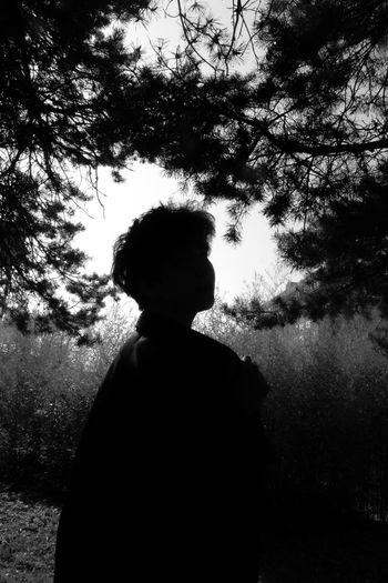 Rear view of silhouette man standing by tree against sky