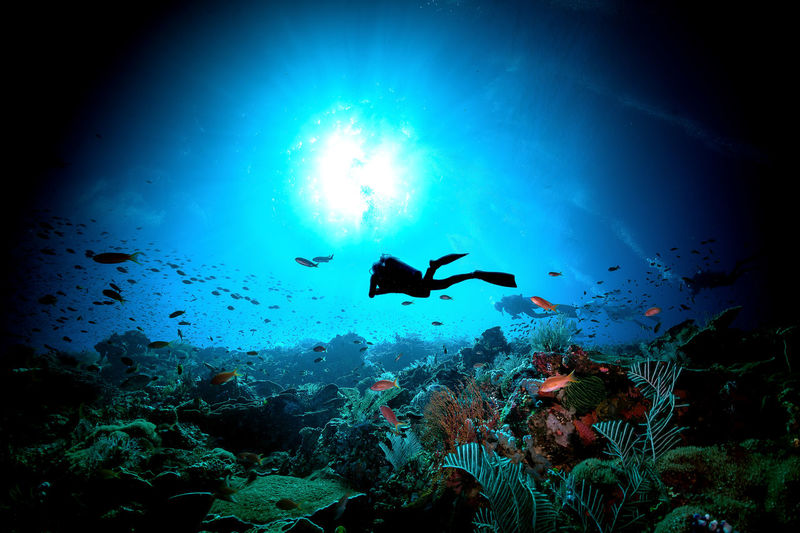 indonesia Animal Wildlife Underwater Animals In The Wild UnderSea Sea Animal Swimming Water Animal Themes Sea Life Group Of Animals Marine Vertebrate Fish Large Group Of Animals Nature Blue Coral Invertebrate No People School Of Fish Outdoors Underwater Diving