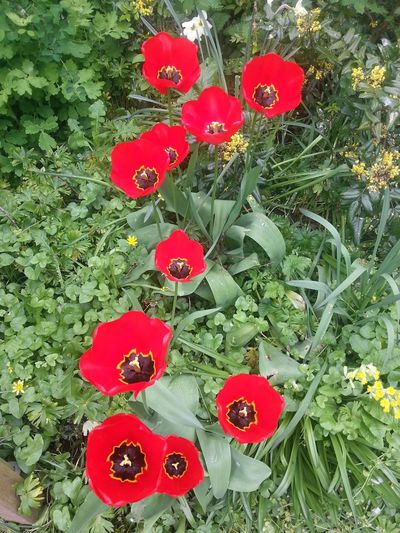 Wild Flowers Olney Buckinghamshire Spring Has Arrived 2013 Samsung Galaxy S3