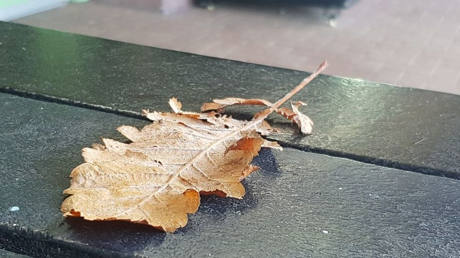 High angle view of dry leaf on plant during autumn