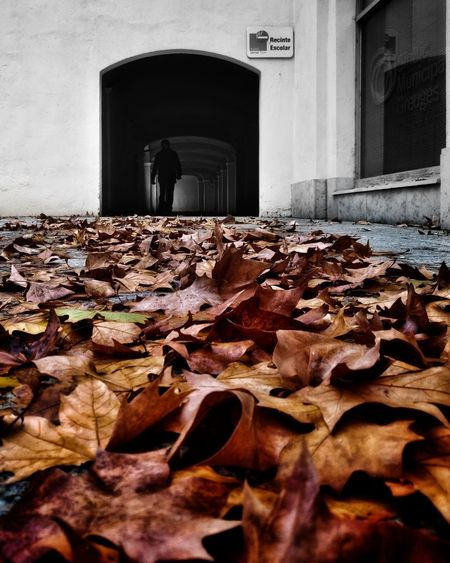 Surface level of dry leaves at entrance of building