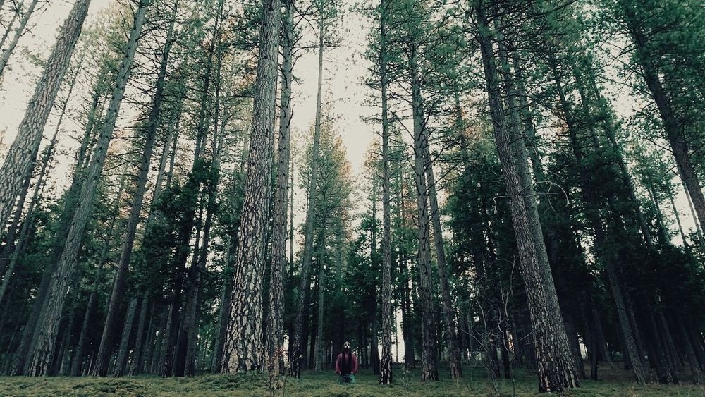 Nature Vscocam VSCO Explore The World Vscogrid Outdoors Scenery Beard Wilderness Trees